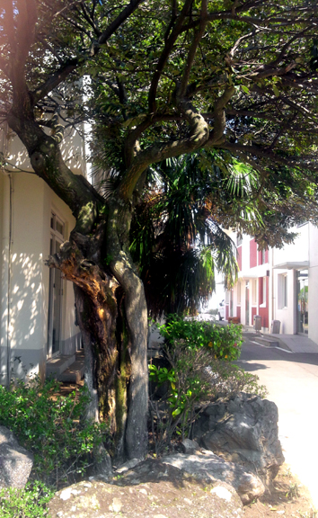 Web_tree